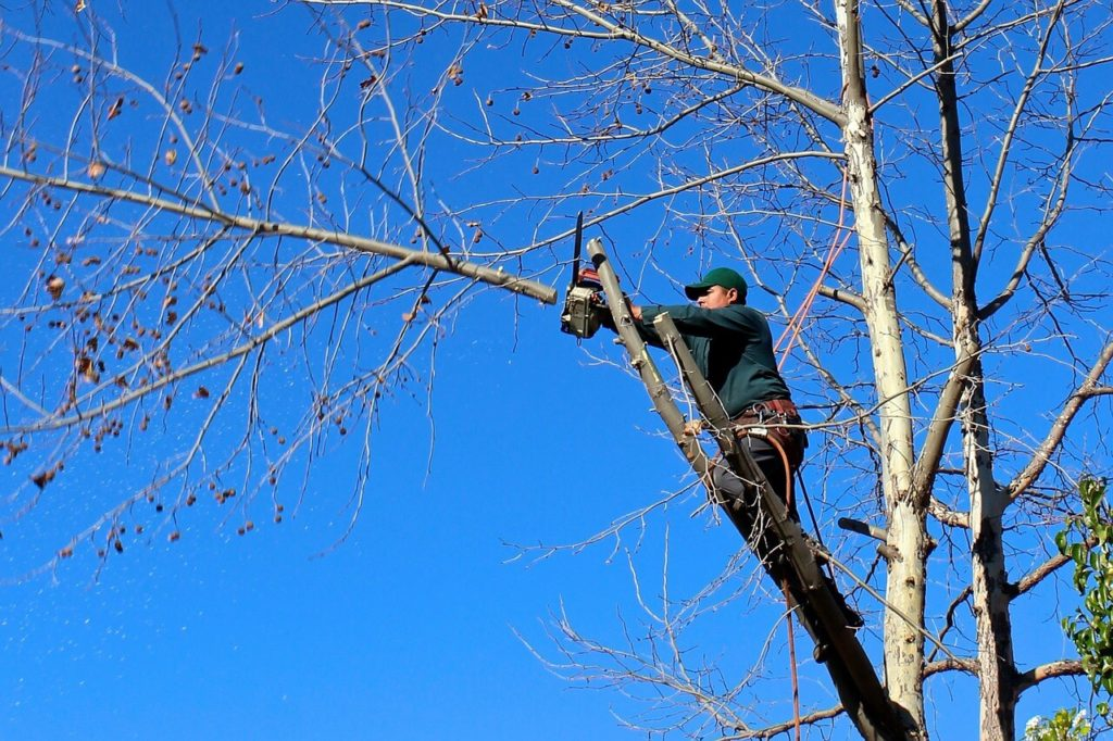 Contact Us-Mulberry FL Tree Trimming and Stump Grinding Services-We Offer Tree Trimming Services, Tree Removal, Tree Pruning, Tree Cutting, Residential and Commercial Tree Trimming Services, Storm Damage, Emergency Tree Removal, Land Clearing, Tree Companies, Tree Care Service, Stump Grinding, and we're the Best Tree Trimming Company Near You Guaranteed!