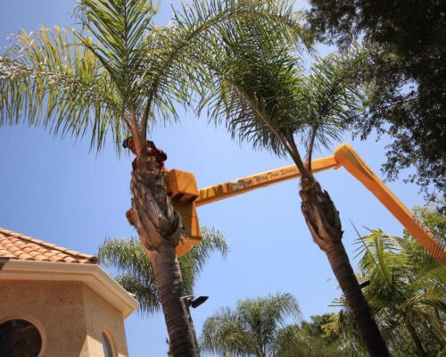 Palm Tree Trimming-Mulberry FL Tree Trimming and Stump Grinding Services-We Offer Tree Trimming Services, Tree Removal, Tree Pruning, Tree Cutting, Residential and Commercial Tree Trimming Services, Storm Damage, Emergency Tree Removal, Land Clearing, Tree Companies, Tree Care Service, Stump Grinding, and we're the Best Tree Trimming Company Near You Guaranteed!