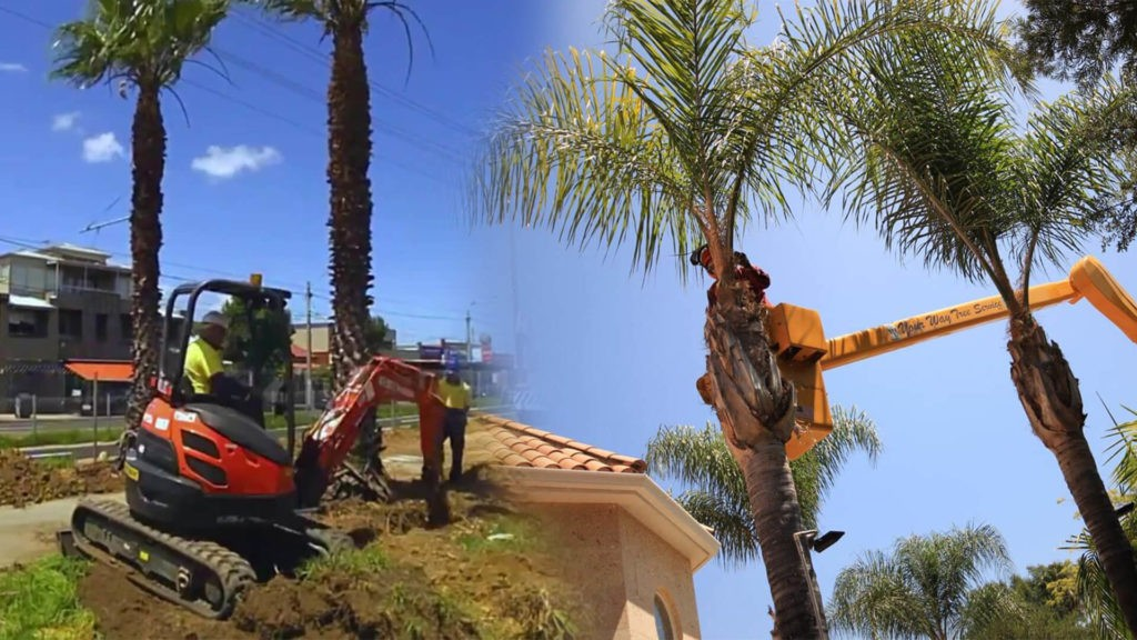 Palm tree trimming & palm tree removal-Mulberry FL Tree Trimming and Stump Grinding Services-We Offer Tree Trimming Services, Tree Removal, Tree Pruning, Tree Cutting, Residential and Commercial Tree Trimming Services, Storm Damage, Emergency Tree Removal, Land Clearing, Tree Companies, Tree Care Service, Stump Grinding, and we're the Best Tree Trimming Company Near You Guaranteed!