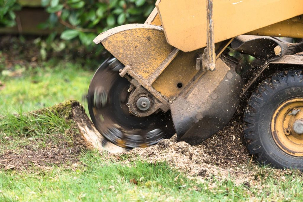 Stump Grinding-Mulberry FL Tree Trimming and Stump Grinding Services-We Offer Tree Trimming Services, Tree Removal, Tree Pruning, Tree Cutting, Residential and Commercial Tree Trimming Services, Storm Damage, Emergency Tree Removal, Land Clearing, Tree Companies, Tree Care Service, Stump Grinding, and we're the Best Tree Trimming Company Near You Guaranteed!