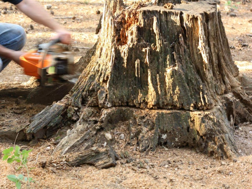 Stump Removal-Mulberry FL Tree Trimming and Stump Grinding Services-We Offer Tree Trimming Services, Tree Removal, Tree Pruning, Tree Cutting, Residential and Commercial Tree Trimming Services, Storm Damage, Emergency Tree Removal, Land Clearing, Tree Companies, Tree Care Service, Stump Grinding, and we're the Best Tree Trimming Company Near You Guaranteed!