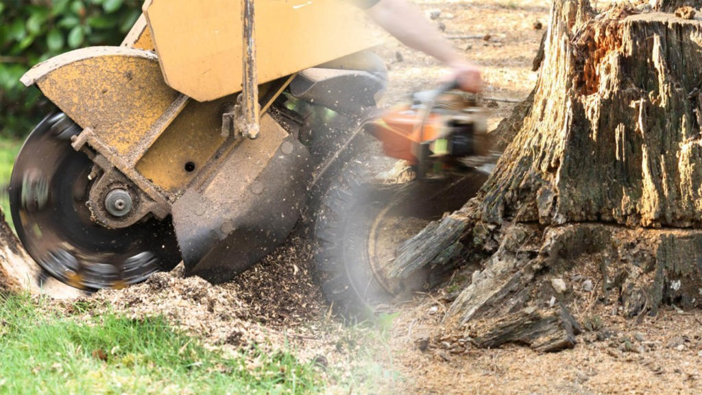 Stump grinding & removal-Mulberry FL Tree Trimming and Stump Grinding Services-We Offer Tree Trimming Services, Tree Removal, Tree Pruning, Tree Cutting, Residential and Commercial Tree Trimming Services, Storm Damage, Emergency Tree Removal, Land Clearing, Tree Companies, Tree Care Service, Stump Grinding, and we're the Best Tree Trimming Company Near You Guaranteed!