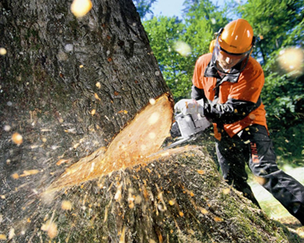 Tree Cutting-Mulberry FL Tree Trimming and Stump Grinding Services-We Offer Tree Trimming Services, Tree Removal, Tree Pruning, Tree Cutting, Residential and Commercial Tree Trimming Services, Storm Damage, Emergency Tree Removal, Land Clearing, Tree Companies, Tree Care Service, Stump Grinding, and we're the Best Tree Trimming Company Near You Guaranteed!