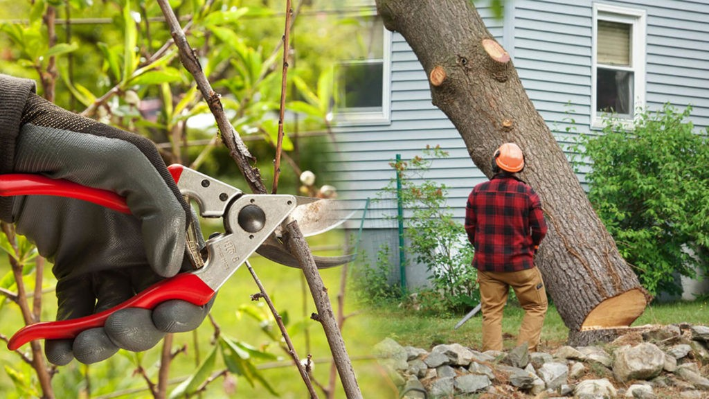 Tree pruning & tree removal-Mulberry FL Tree Trimming and Stump Grinding Services-We Offer Tree Trimming Services, Tree Removal, Tree Pruning, Tree Cutting, Residential and Commercial Tree Trimming Services, Storm Damage, Emergency Tree Removal, Land Clearing, Tree Companies, Tree Care Service, Stump Grinding, and we're the Best Tree Trimming Company Near You Guaranteed!